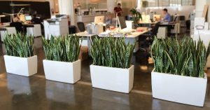 How to Care for Your Office Plant