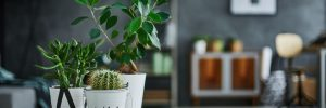 Houseplants for Sale in Middlebury, VT