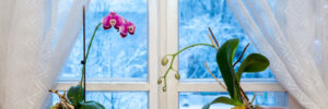 Houseplants & Winter Floral Arrangements in Middlebury, VT