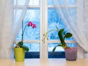 Houseplants & Winter Floral Arrangements in Middlebury, VT